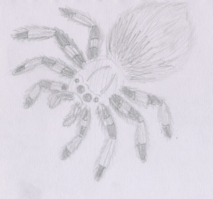 Sketch 003